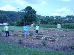 Sandyvale Community Gardens